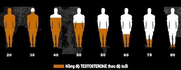 SUY GIẢM TESTOSTERONE