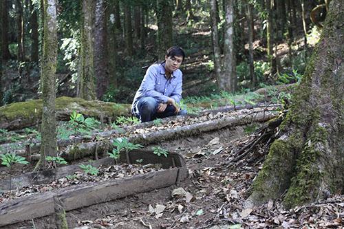 Vườn sâm của anh An nằm trong rừng già trên đỉnh Ngọc Linh